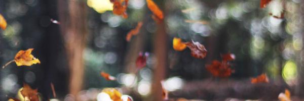 sophrologie et respiration, quel bienfait pour le zèbre (HP)